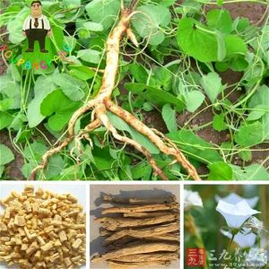 Anti-tumor Chinese herbal medicine