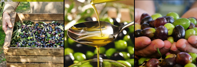 Young Woman: How to Get the Olive Oil Extract